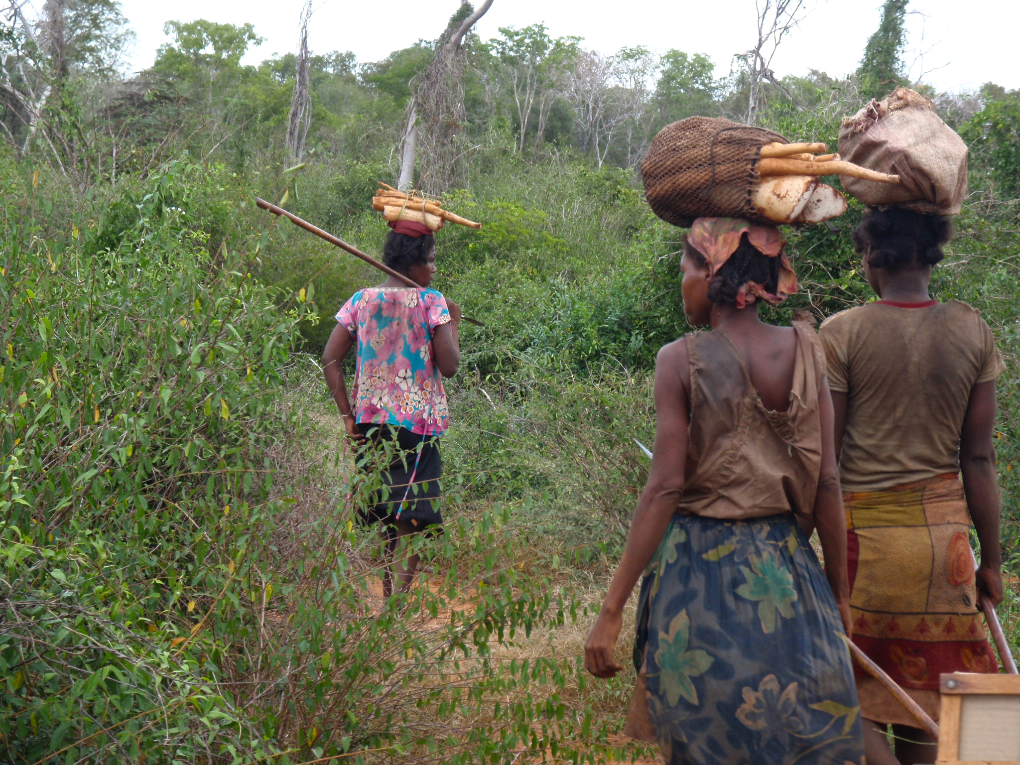 Retour des femmes au campement avec la récolte du jour.