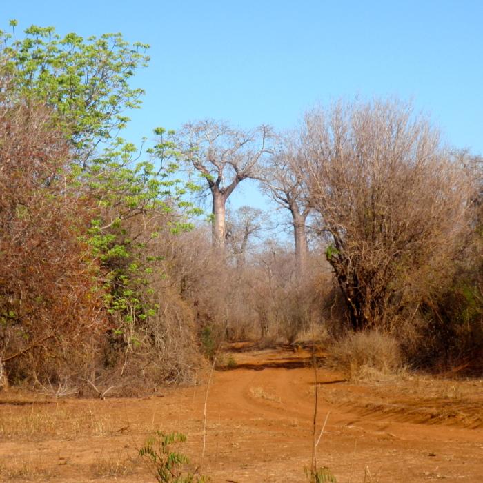PIste et végétation typique, basse épineuse et dense