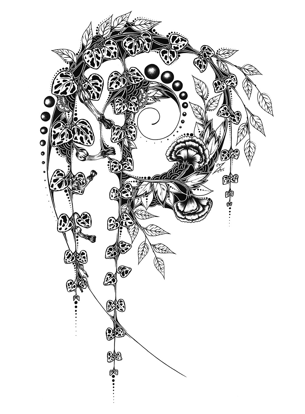 Ceropegia - Original Drawing - 30x42 cm - 369€