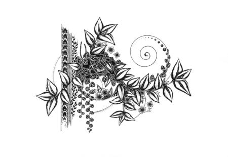 Tradescentia & Peperomia